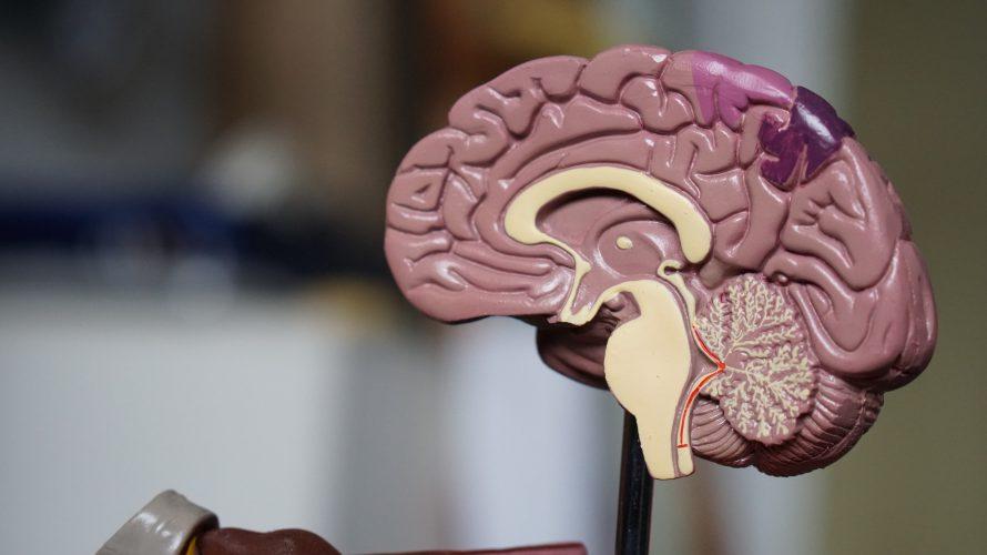 質問で自分の脳内を覗く
